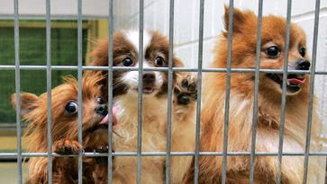 Leonia ordinance would ban sales from puppy and kitten mills