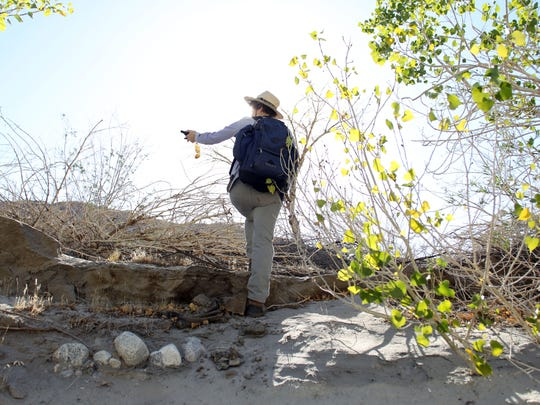 Lori Hargrove of the San Diego Natural History Museum looks for a spot to count birds at the Whitewater Preserve on May 15.