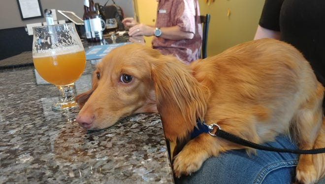 Snowbank Brewing in Fort Collins, Colorado, is home to several rescue dogs, and dog owners are encouraged to bring their pets.