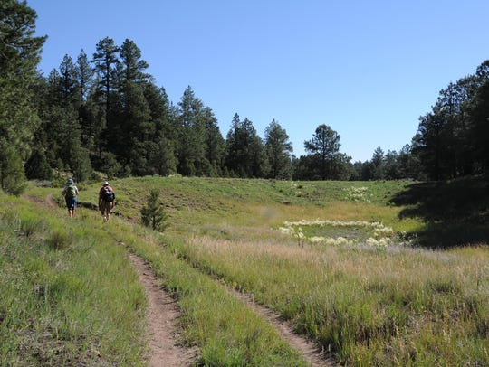 This less-known trail in Flagstaff passes through woods