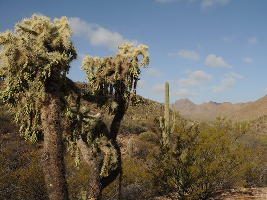 The 5.9-mile David Yetman Trail winds through the Tucson