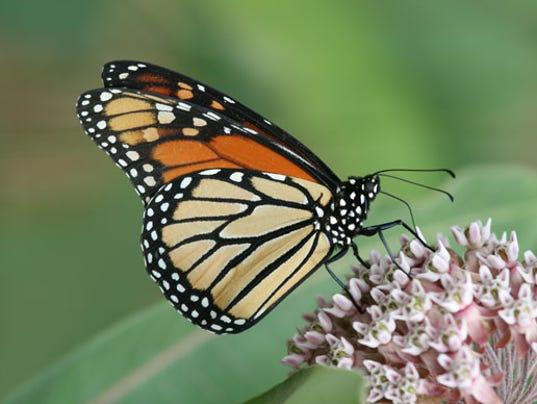 WSF-224-Monarchs-580x388.jpg