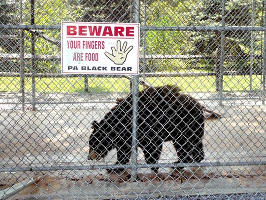Ricki, a Pennsylvania black bear, lived in a cage at Jim Mack's Ice Cream/Cones and Clubs in Hellam Township before being moved to a sanctuary in Colorado.