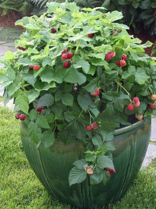-Raspberry Shortcake.jpg_20140510.jpg