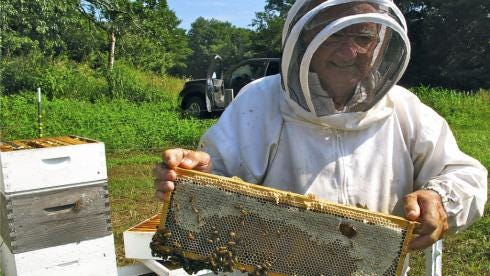 Edd Buchanan pulls a frame from a hive at the Biltmore Estate in Asheville, N.C., to examine how well his bees are developing a honeycomb.