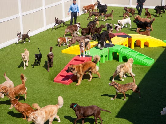 Outdoor spaces are equipped with plenty of canine play sets where dogs can stretch their legs in open-air play areas at K-9 Resorts.