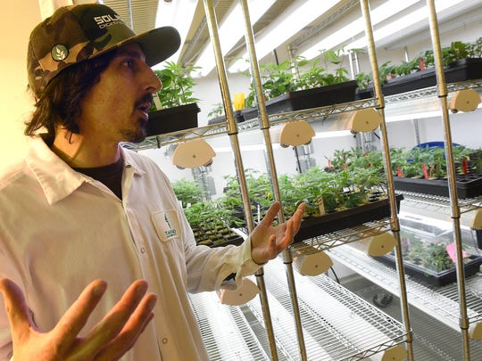 Cultivation manager Mike Rognier leads a tour of the Sparks-based cultivation center where Tahoe Reno Botanicals grow operation and Tahoe Reno Extractions lab is based on Feb. 24, 2017.