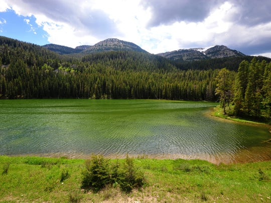 Wood Lake located on Bench Mark Road in the Helena-Lewis and Clark National Forest near Augusta, Montana, experienced a large fish die off over the winter.