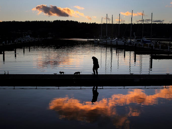 A dog walker on the public marina dock at the Poulsbo