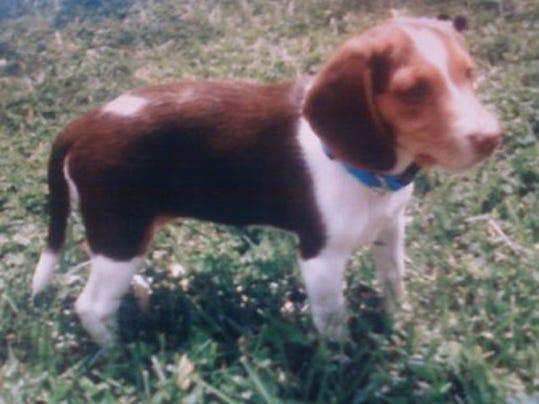 lost-beagle0226