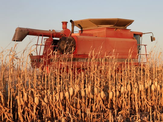 A combine harvests corn near Schyler, Neb., Thursday, Nov. 30, 2017. A couple days of strong winds in late October arrived at the wrong time for corn farmers who saw their crops shrink as ears of corn fell to the ground. Some eastern Nebraska farmers reported the value of their crop dropping roughly $19,000 an acre overnight as their yields fell from an estimated 250 bushels an acre before the wind to roughly 190 bushels afterward, according to crop insurance giant RCIS.