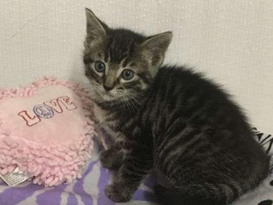 """Suki, which means """"loved one,"""" is an 8-week-old female"""
