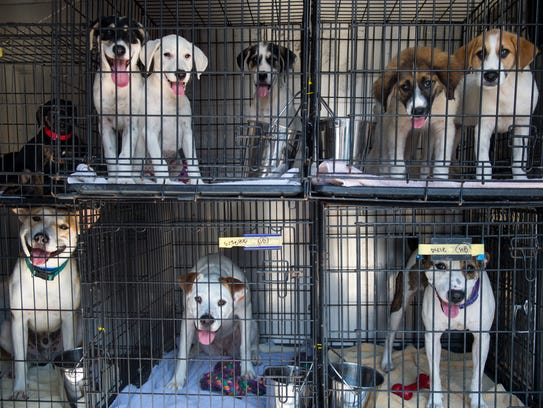Dogs wait to be transported by the Smoky Mountain Animal