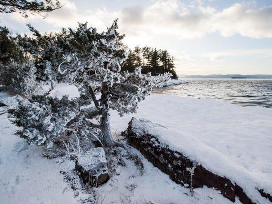 Frost rimes a tree at Oakledge Park in Burlington on