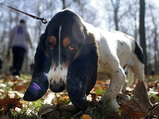 Dogs rule at these tail-wagging Indianapolis events