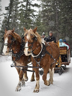 Draft horses pull guests to the North Fork Cabin at Lone Mountain Ranch.