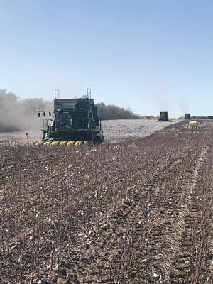 Cotton is a relatively new crop for 2019 Conservationist of the Year award winners in Pratt County, Richard and Karen Smith.