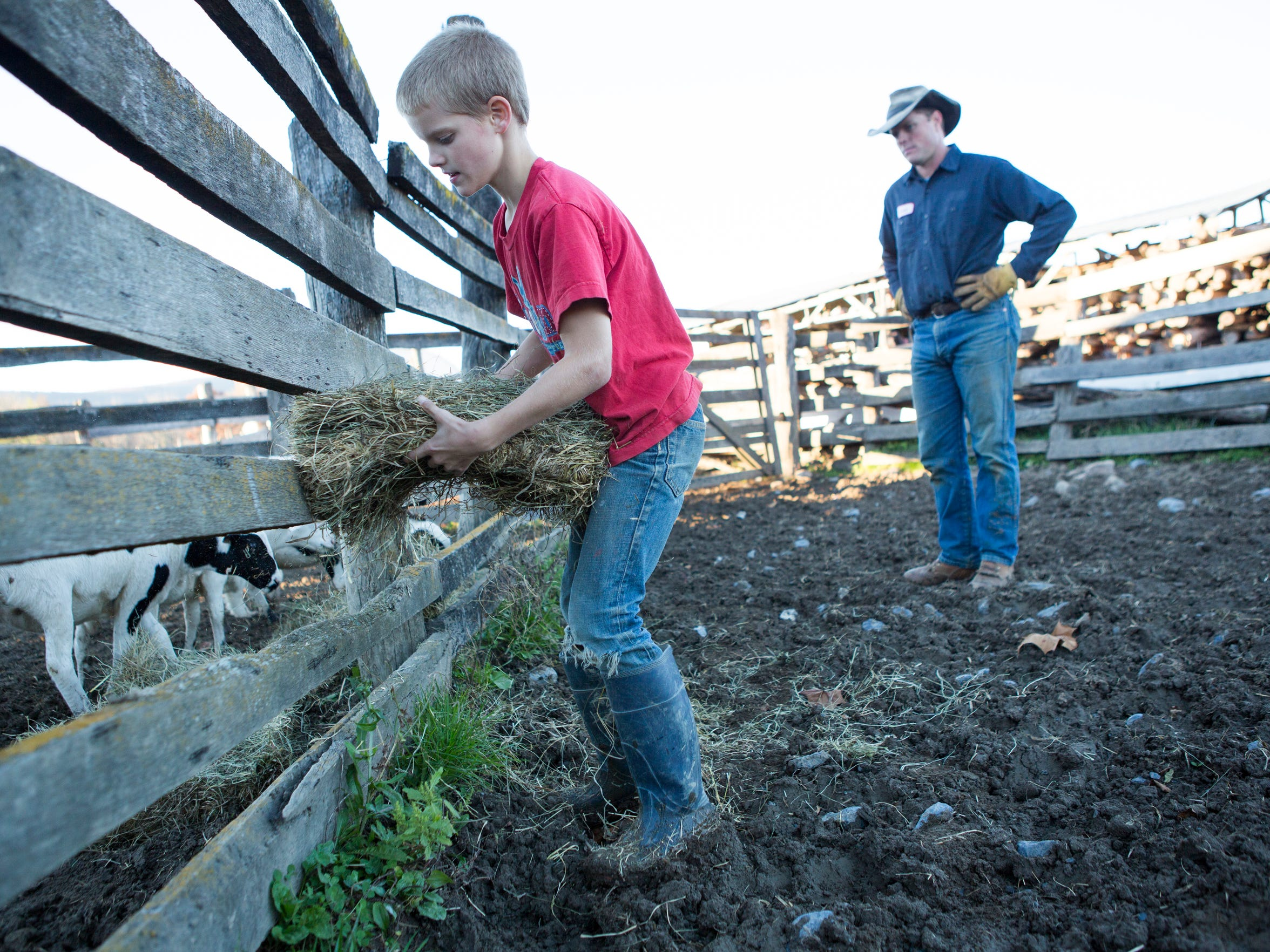 Andrew Salatin, 10, feeds sheep in their pen with his father, Daniel Salatin, after the animals escaped from their forest enclose at Polyface Farms in Swoope on Friday, Oct. 30, 2015.