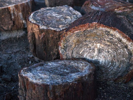 Many logs along the Crystal Forest Trail at Petrified Forest National Forest contain sparkling crystals.