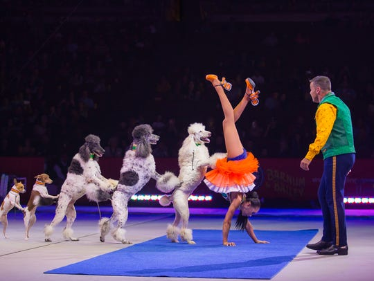 """Trained dogs in """"Out of This World,"""" presented by Ringling"""