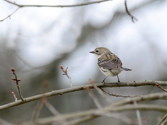 Go bird watching at Scotland Run in Clayton.