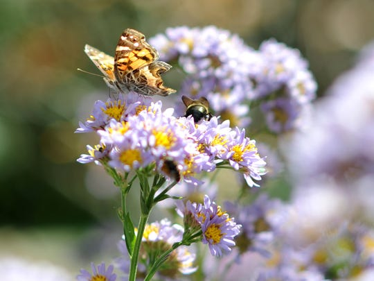 Pollinators take center stage in Asheville throughout the  month of June.