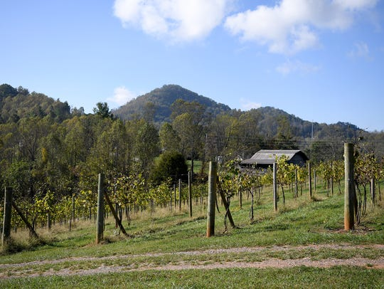 Jeff and Dianne Frisbee operate Addison Farms Vineyard on 55-acres in Leicester.