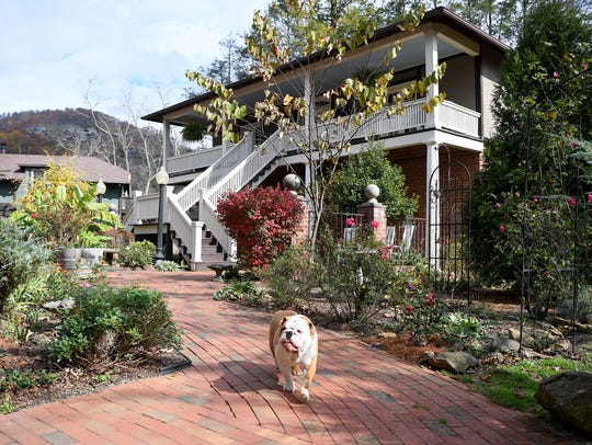 Finn, the bulldog, walks between the Reynolds Mansion