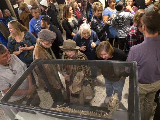 Community members examine the fossil of an oreodont during an unveiling ceremony Wednesday at the Sherman Dugan Museum at San Juan College in Farmington.