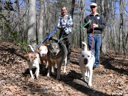 Eve Miller and Josh Worsham walk their small pack, Jax, Bubba, Lucy and Luna through the Bent Creek Experimental Forest in this November 2017 photo. Dogs are allowed in Bent Creek and in the N.C. Arboretum as long as they are on a leash.