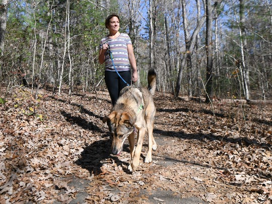 Bethany Adams walks Frida Bird through the Bent Creek Experimental Forest on Friday, Nov. 17, 2017. Forest Service law enforcement is ramping up enforcement of the leash law and writing tickets to the owners of non-leashed offenders.