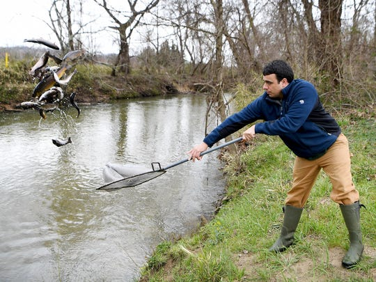 Danny Rivera tosses a net of hatchery fish into Cane Creek at Fletcher Park as he stocks the river with the North Carolina Wildlife Resources Commission on Wednesday, March 21, 2018. The fish were released, or stocked, at different points along the river.