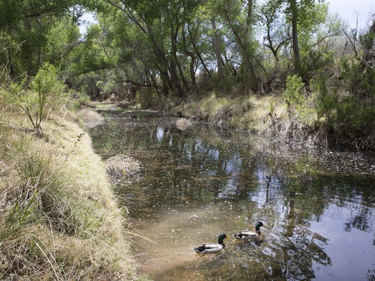 The San Pedro River provides habitat for a wide variety of birds.