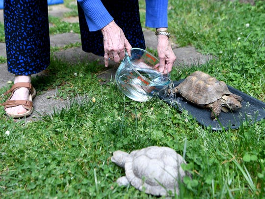 Judith Patience pours water into a pan so her tortoise,
