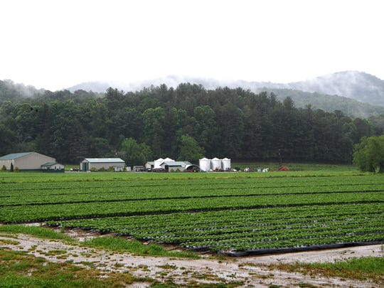 The fields surrounding North River Farms were saturated with water as rain continued to fall in Mills River on Wednesday, May 30, 2018. Farmers in the area have lost significant amounts of potential produce because of heavy rains and flooding.