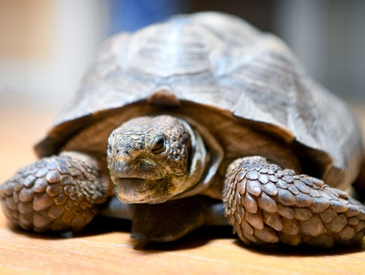636652588408962922-Tommy-Tortoise-goodbye-003.JPG