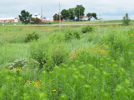 Rob Stout is adding prairie strips to his Washington farm to help support monarch butterflies and other pollinators. Environmental groups seek to have monarchs listed as an endangered species.