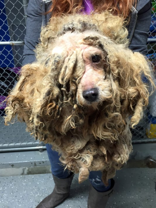 14 Puppies seized 0126