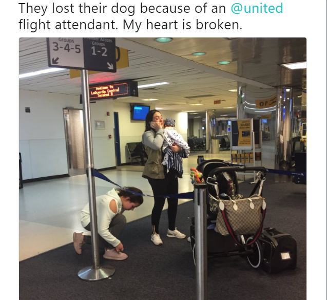 A Family Is Mourning The Loss Of Their Bulldog After A United Airlines  Flight Attendant Forced The Dog Into An Overhead Bin During A Three Hour  Flight.