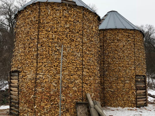 Corn is stored in cribs at the Grapevine Log Cabins dairy farm outside Sparta.