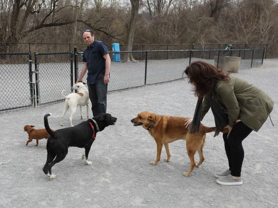 Pets and their owners play at the White Plains Bark