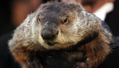 Punxsutawney Phil is wanted for deception.