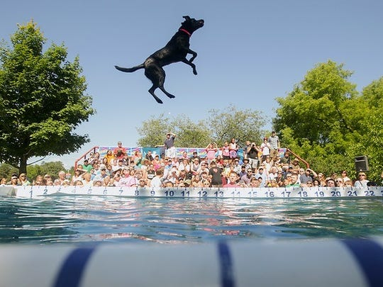 The Ultimate Air Dogs will do a total of eight performances Saturday and Sunday at the St. Clair Shores Aqua Fest.