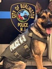 K-9 Kobi of the Burlington City Police Department is sporting the new protective vest that was donated to the police force from a nonprofit.