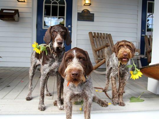 bur1010upcol-dogs.jpg