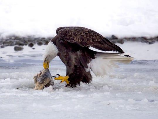 Eagle Preserve Mine Prospect