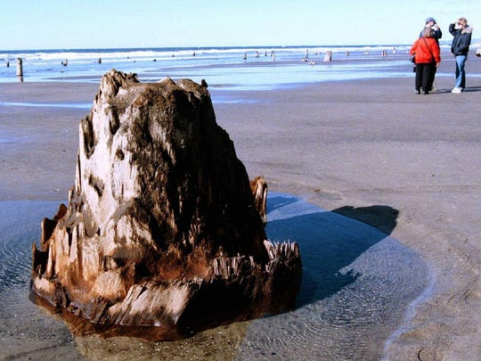 Beachgoers pass stumps from a 2000-year-old forest that have emerged from the beach one-half mile south of the state park at Neskowin on the Oregon Coast.