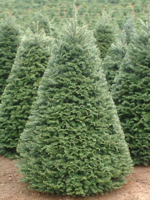 Taking the extra time to recycle Christmas trees is one way to keep an eye on the environment.