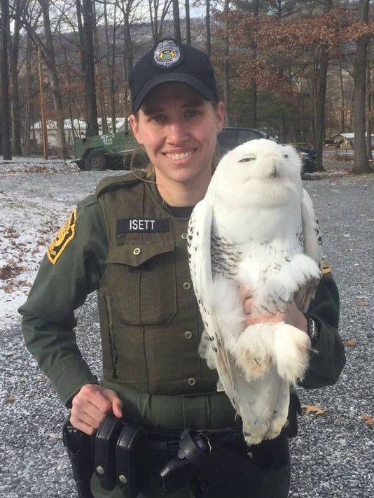 cpo-sub-Snowy-owl.jpg