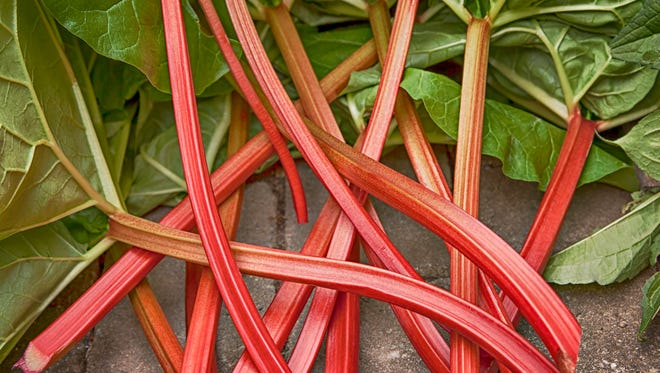 Image of fresh stems of rhubarb straight from the garden vegetable patch.